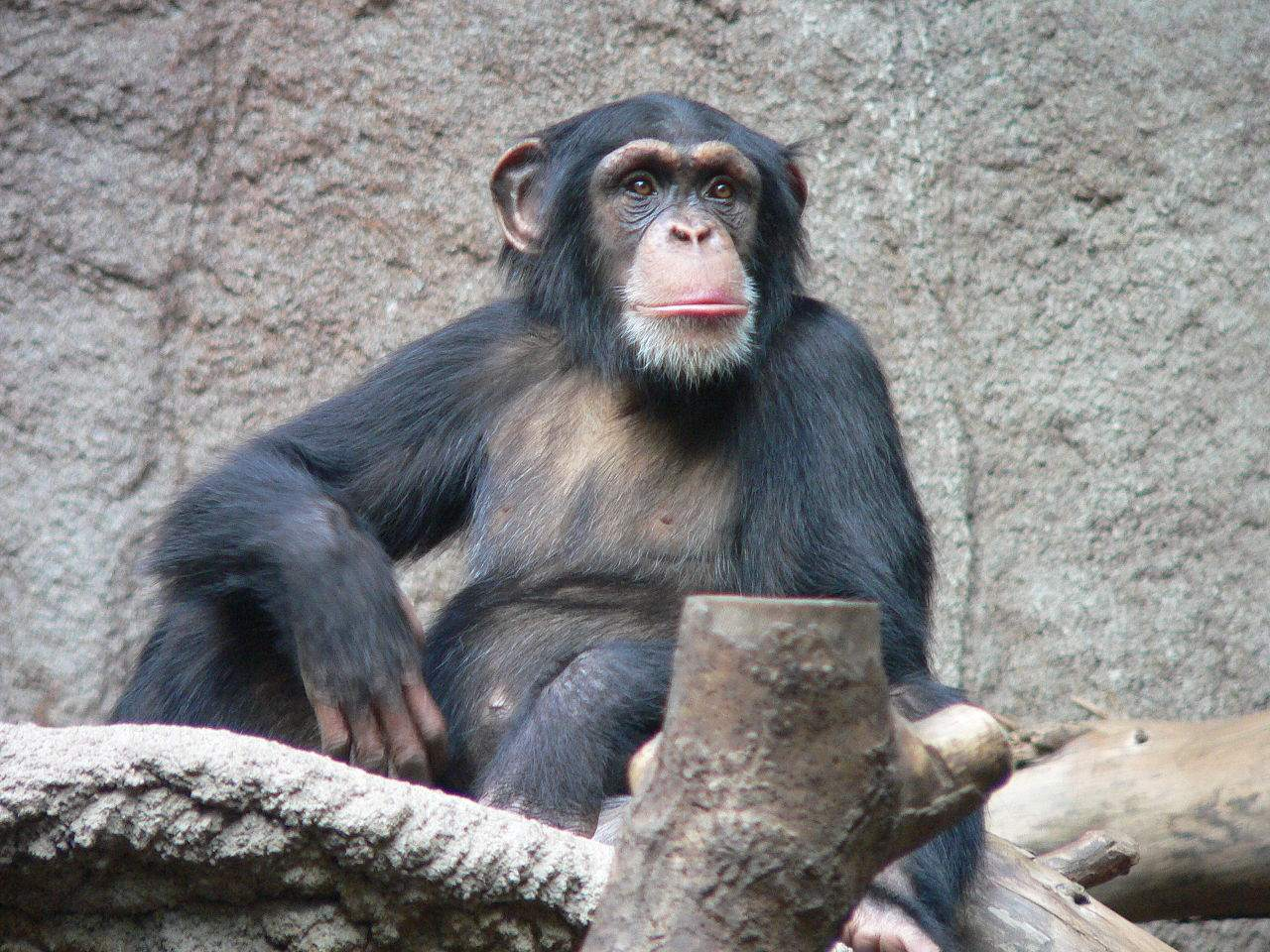 Affe besser als Fondsmanager