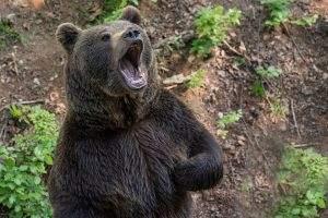 Bei den Profi-Investoren dominieren derzeit die Bären in Sachen Dax