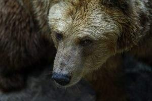 Bevor es zu einer Rezession kommt, tauchen Aktienmärkte in der Regel in einen Bärenmarkt