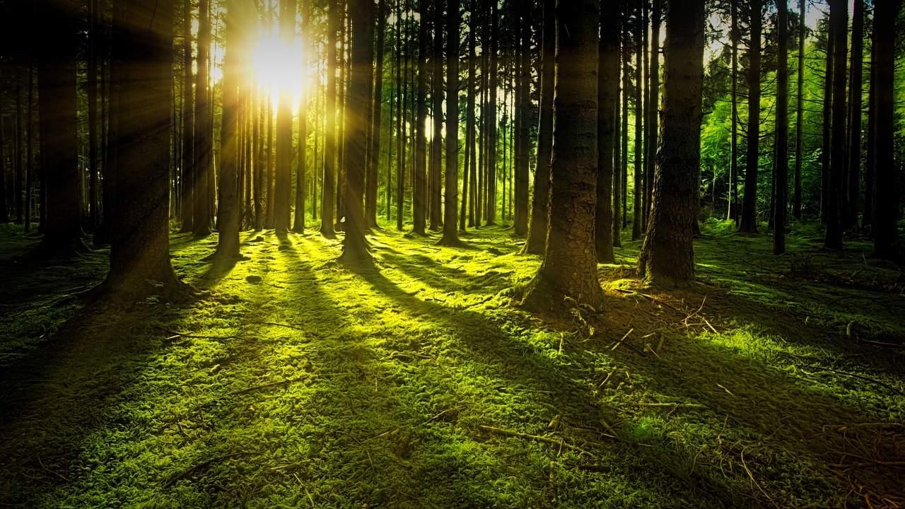 Life Forestry Problem bei BaFin - Beispielbild Wald