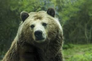 Haben die Bären Recht mit ihrer skeptischen Einstellung für die Aktienmärkte?