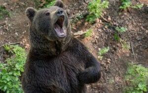 Die Belastungsfaktoren für die Aktienmärkte - Steilvorlage für Bären?