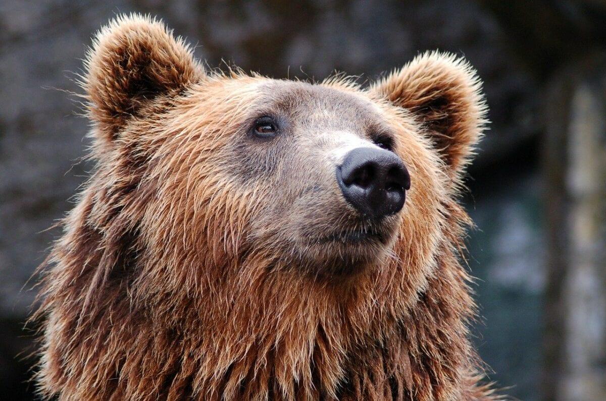 DAX daily: Die Bären melden sich zurück - EZB im Blick