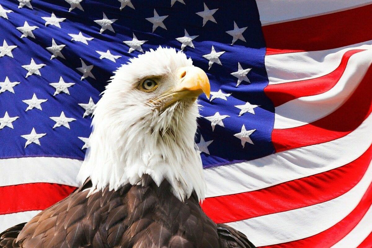 USA Flagge und Adler