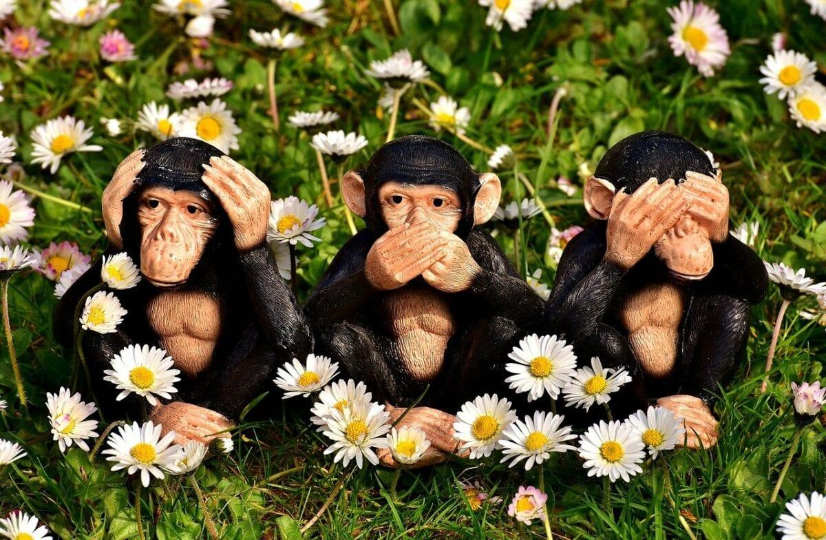 Die drei Affen als symbolische Aussage über die Unwissenheit zu Wirecard