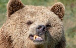 Die Bären warten schon lange auf eine nennenswerte Korrektur der Aktienmärkte