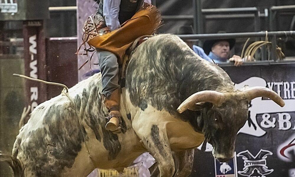 Dax & Co: plötzlich tark wie ein Bulle!