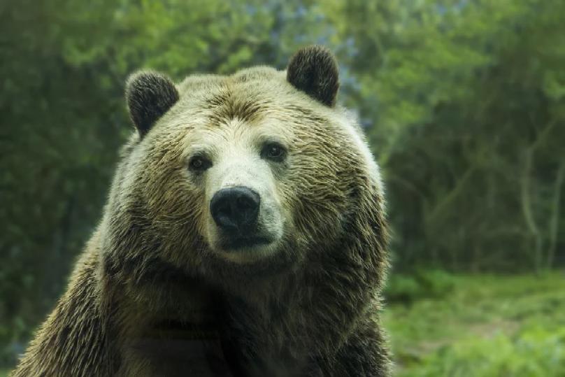 Aktienmärkte nach einem Bärenmarkt